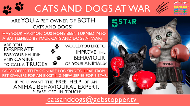 5 Star TV Poster Ad Copyright Gobstopper.TV Cats and Dogs at War