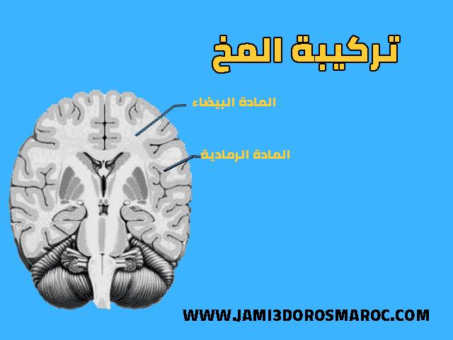 درس الجهاز العصبي الثالثة اعدادي