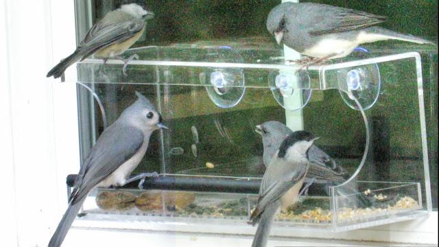 Clear Acrylic Window Bird Feeder by MOOKZZ