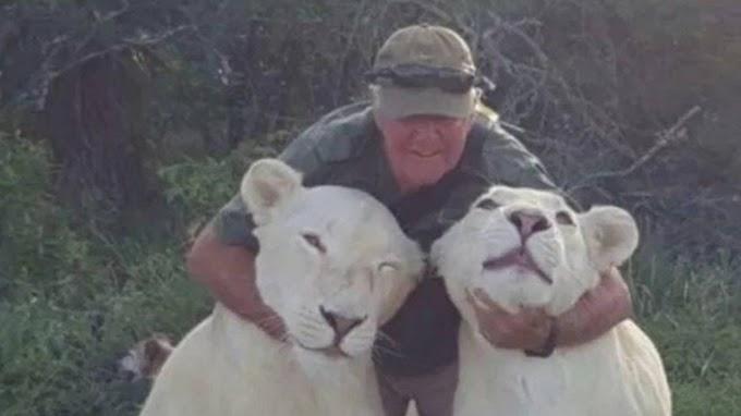 Ambientalista é morto por leoas albinas das quais cuidava desde filhotes