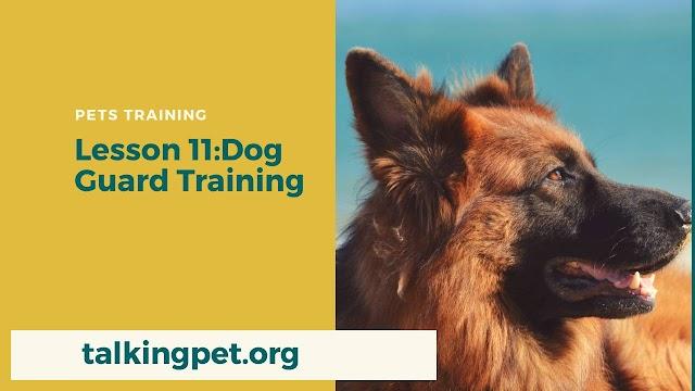 Dog Guard Training