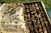 Για να ζούν περισσότερο οι μέλισσες το Χειμώνα: Μικρά μυστικά για δυνατότερα σμήνη