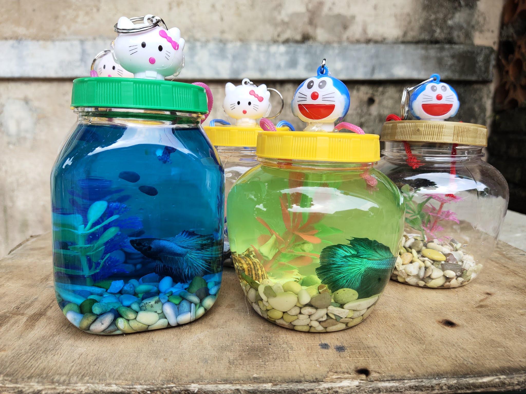 Ransel Menjajal Bisnis Ikan Cupang Aquarium Mini