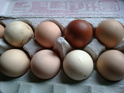 Egg Nutrition Facts   Eggs Benefits   Eating Raw Eggs