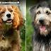 Η ΛΑΙΔΗ ΚΑΙ Ο ΑΛΗΤΗΣ! Ο αδέσποτος σκύλος που θα πρωταγωνιστήσει στην ταινία
