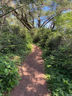 A path in Sitka Sedge Natural Area.