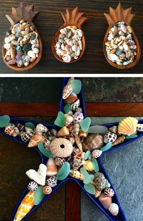 35 seashell collection display ideas