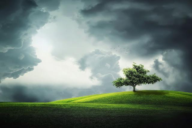 Hình ảnh thiên nhiên đẹp nhất 4k - The most beautiful nature picture 4k 3