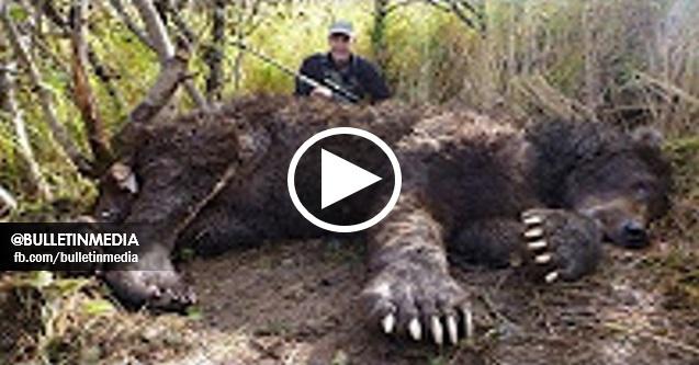 [VIDEO] SUBHANALLAH!! Aneh Tapi Nyata ! Inilah Binatang Binatang Terbesar di Dunia. MENAKUTKAN!!
