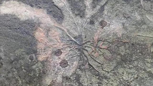 Hallan en EEUU el bosque fósil más antiguo del mundo