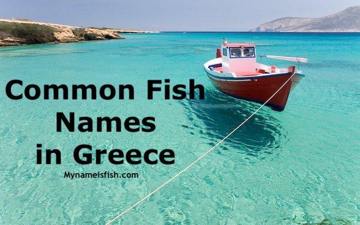Fish names in Greek