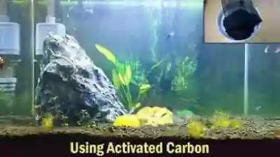 Pemakaian karbon aktif untuk Akuarium