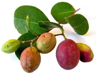 Icaco Fruta de Venezuela