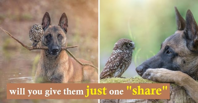 Belgian Malinois And Tiny Owl Have The Most Unlikely Friendship, And Their Photos Are Adorable