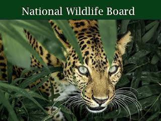 राष्ट्रीय वन्य जीव बोर्ड |
