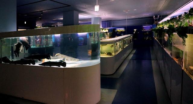 Vista de las peceras del acuario en la planta baja de la Torre de Tokio