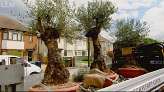 Moving Olive Trees