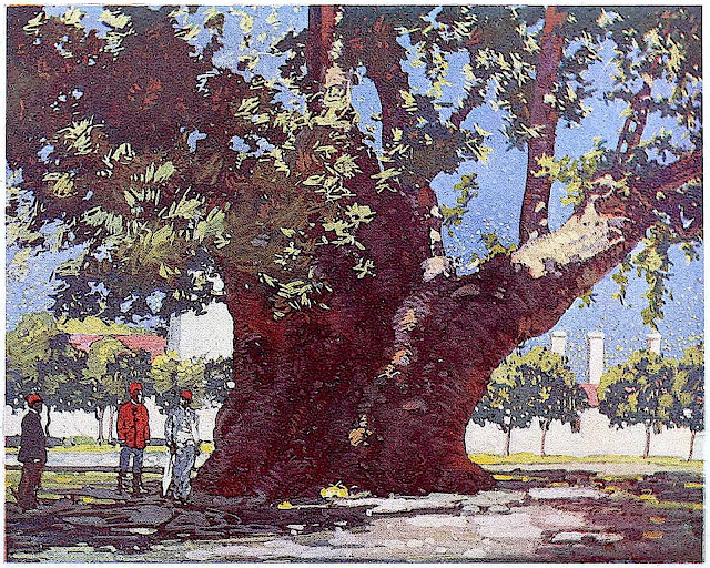 a 1910  Russia illustration of a very thick old tree