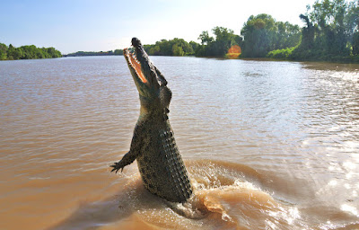 saltwater crocodile facts