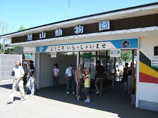 Liburan di Kebun Binatang Asahiyama Jepang