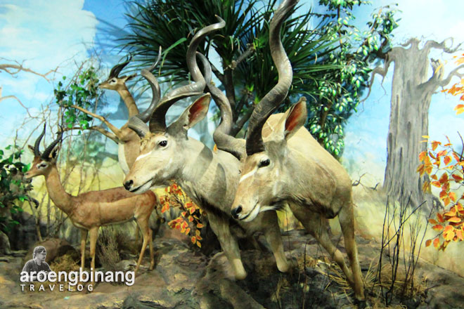 rahmat international wildlife museum gallery