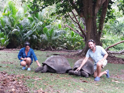 tortugas gigantes seychelles