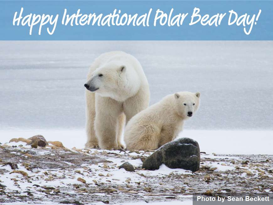 International Polar Bear Day Wishes Images download