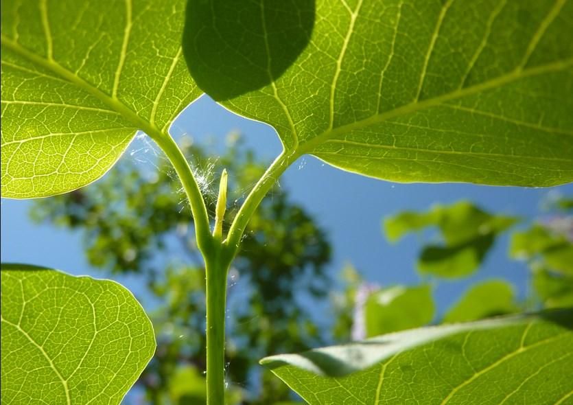 foto Pertumbuhan & Perkembangan Tumbuhan