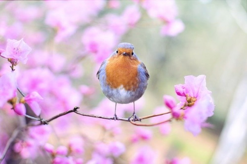 Pássaro em galho com flores numa paisagem primaveril. #PraCegoVer
