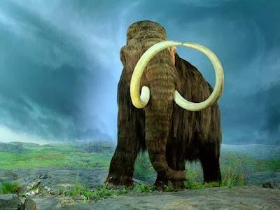 https://bio-orbis.blogspot.com.br/2014/02/mamutes-extintos-por-vegetacoes.html