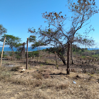 Policía apresa en Barahona 20 personas invadían terrenos privados