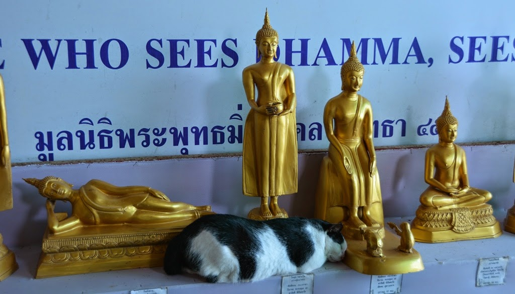 Big Buddha Phuket cat