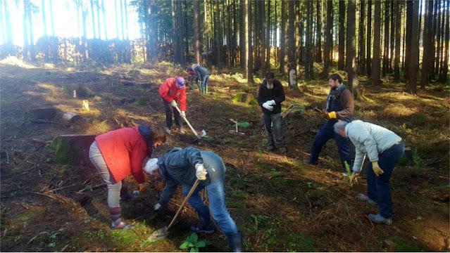"""Mitglieder von """"WOHNmobil für Klimaschutz"""" pflanzen eigenhändig Bäume."""