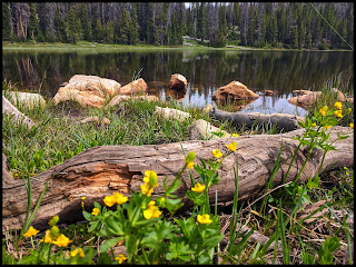 Yellow flowers on the edge of Crystal Lake Uintas