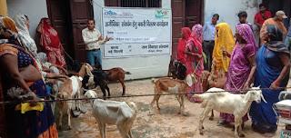 आजीविका चलाने के लिए महिलाओं को दी गयी बकरी | #NayaSaberaNetwork