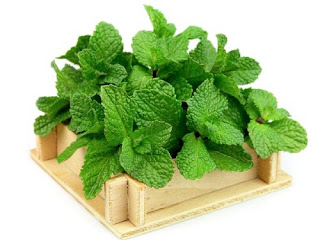 Health Benefits of Pudina Mint