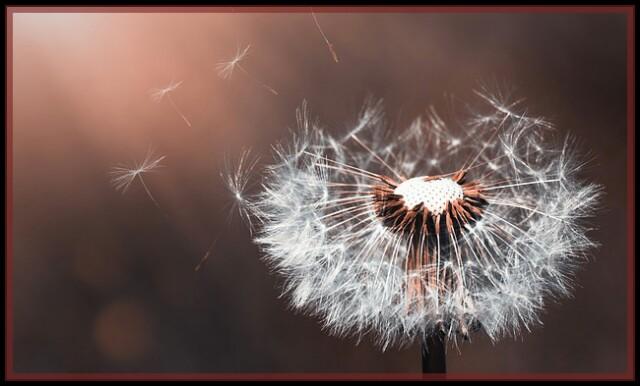 Danedeline Flower,nature,spore