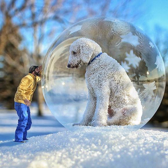 Fotógrafo transforma seu Cão em um gigante para diversas imagens criativas
