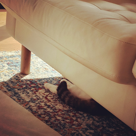 image of Olivia the White Farm Cat's tail and back feet peeping out from beneath the sofa
