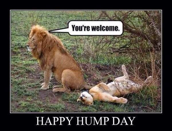 Hump Day Dirty Memes Funny