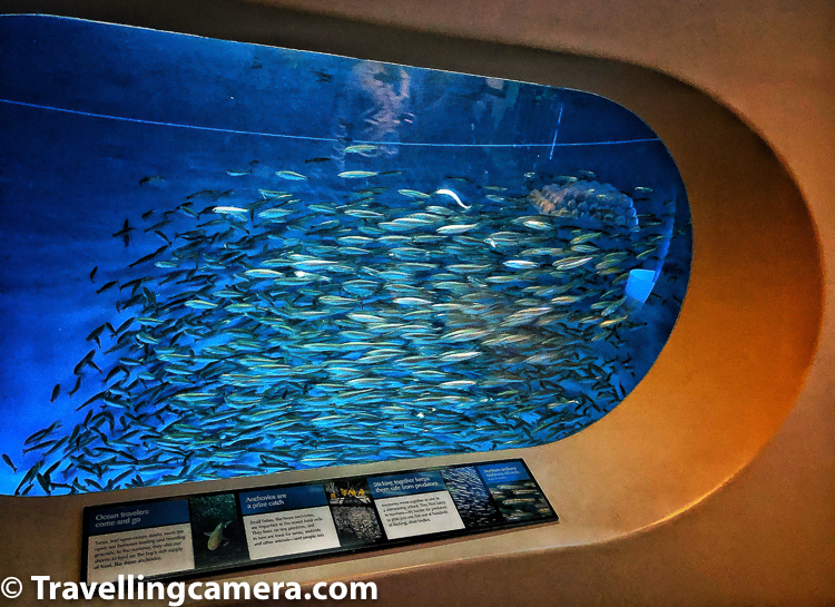 The Open Sea community exhibit is the aquarium's largest tank is made of fiberglass-reinforced plastic which is 80 feet long and 35 feet deep. One of the Monterey Bay aquarium window is largest in the world when it was installed in 1996.