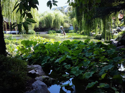 Lotus pond at the Chinese Garden of Friendship Darling Harbour