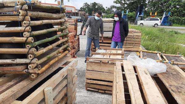 Panglima TNI Sumbangkan 59 Ekor Babi Hutan, Diangkut Pakai Pesawat Hercules ke Papua