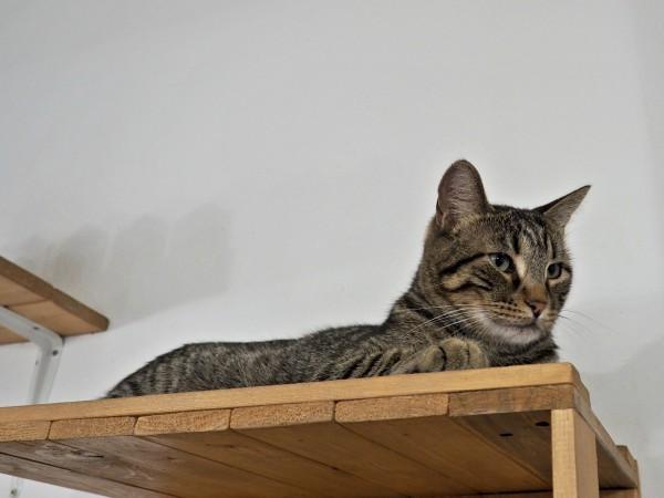 barcelona cat cafe espai de gats