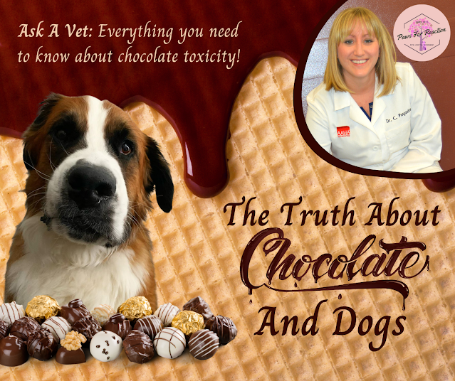 Ask a vet: Why is chocolate poisonous to dogs? What do I do if my dog eats chocolate?