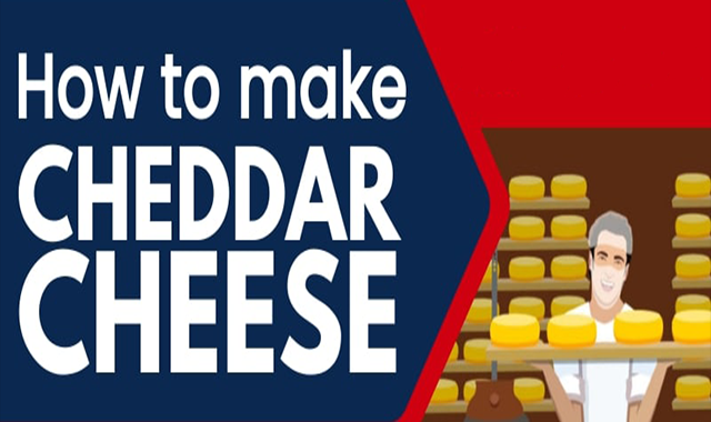 How to Make Cheddar Cheese #infographic