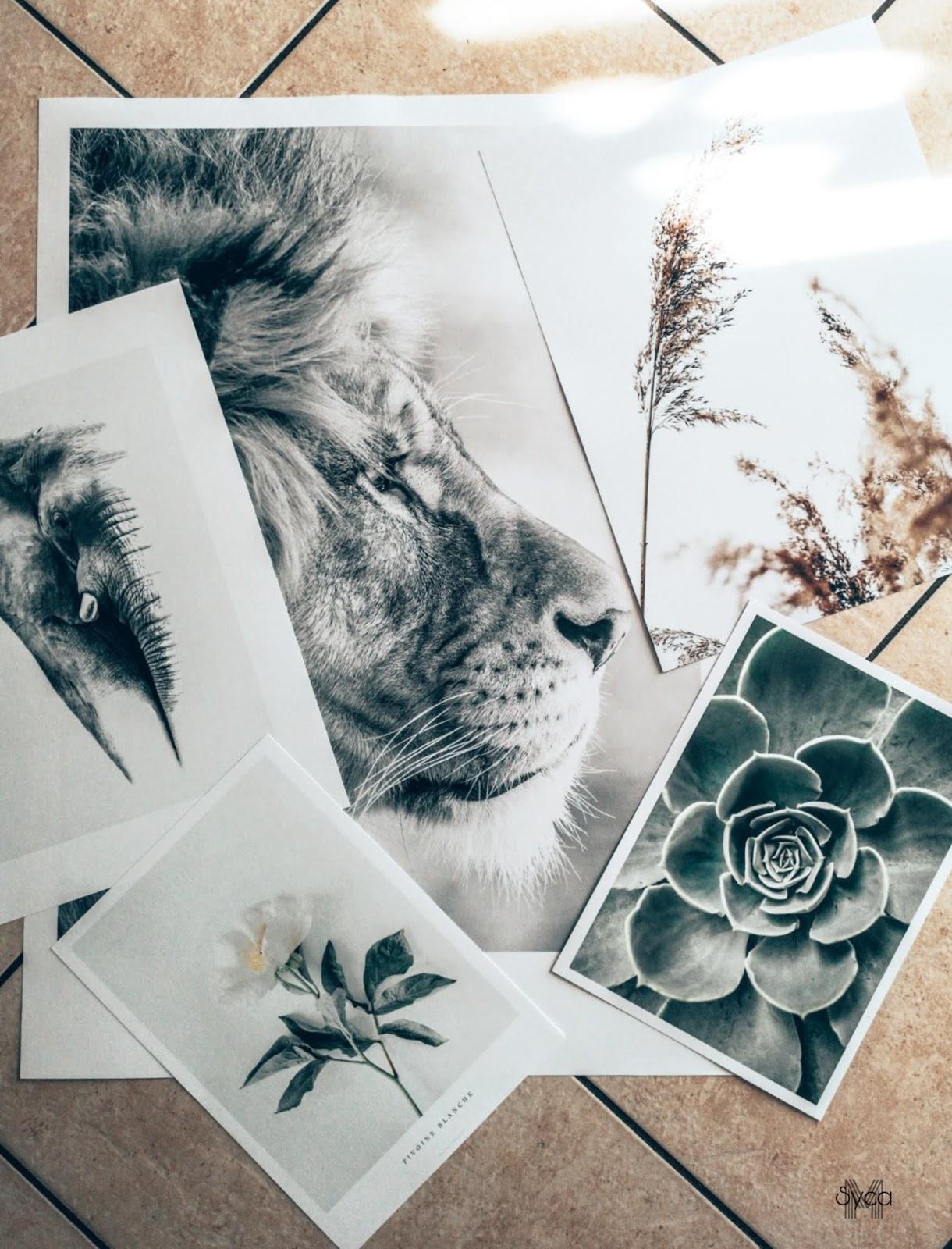 selection-de-posters-avec-poster-store-code-promo-dovozo-mama-syca-beaute
