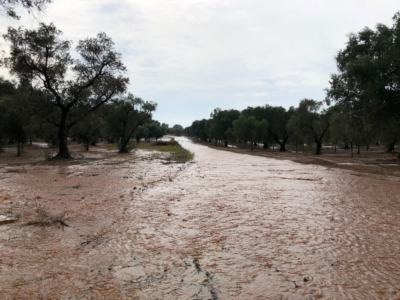 Maltempo Coldiretti danni nelle campagne pugliesi
