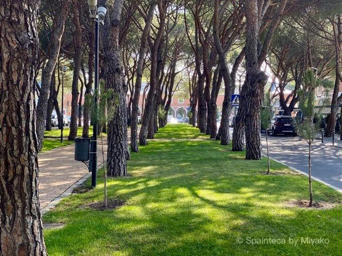 5月の新緑の頃のマドリードの松の木のある散歩道