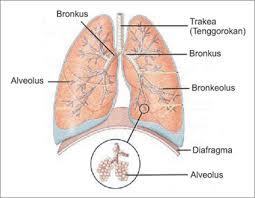 Perbedaan Penyakit Paru-Paru Basah Dan Tbc download%2B%25282%2529
